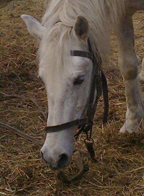 Отек ног у лошадей как лечить