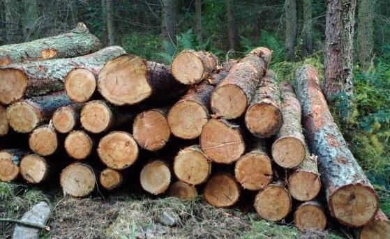 как сохранить заготовленное дерево