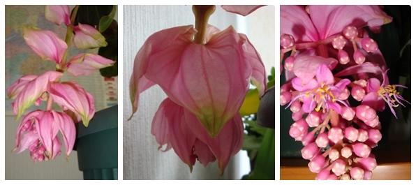 """Комнатные цветы -""""Свой домик в деревне"""" читать он-лайн, скачать"""
