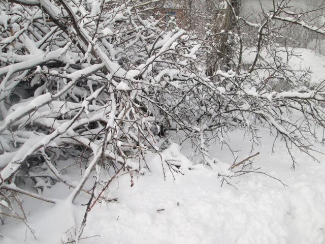 февраль - работы в саду