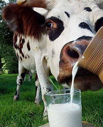 """Коровье молоко против рака - """"Свой домик в деревне"""" скачать"""