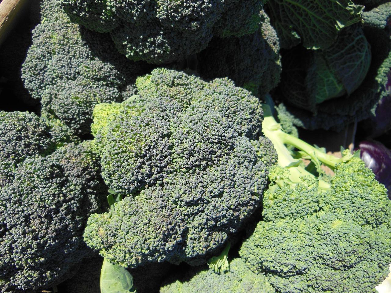 доращивание капусты брокколи