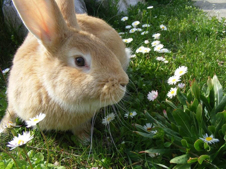 кролики весной