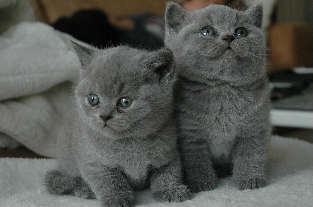 коты фото 22