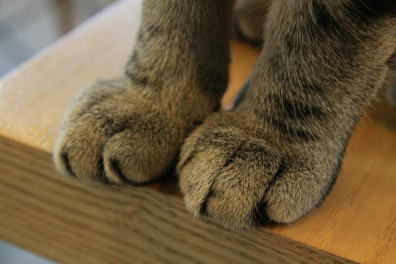 лапа кота фото (1)