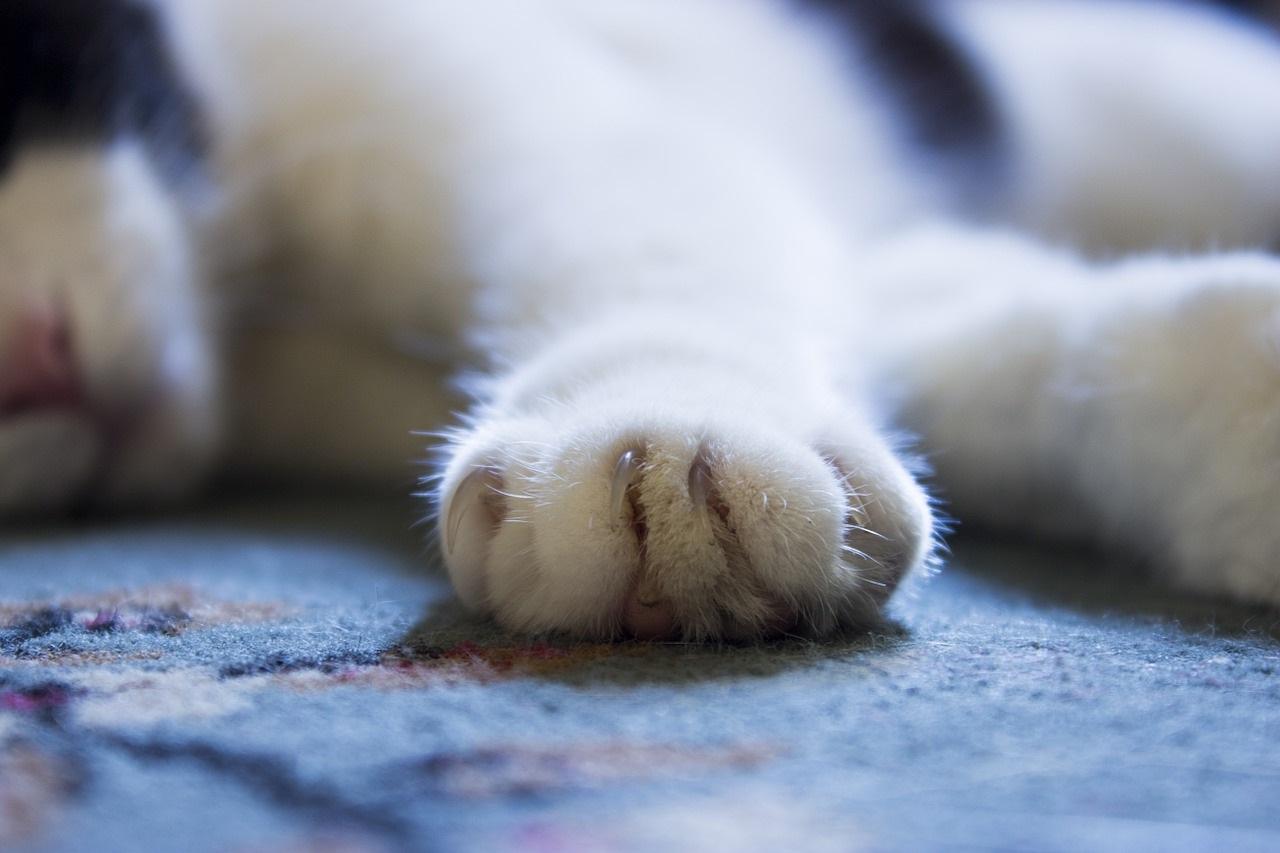 лапа кота фото (11)