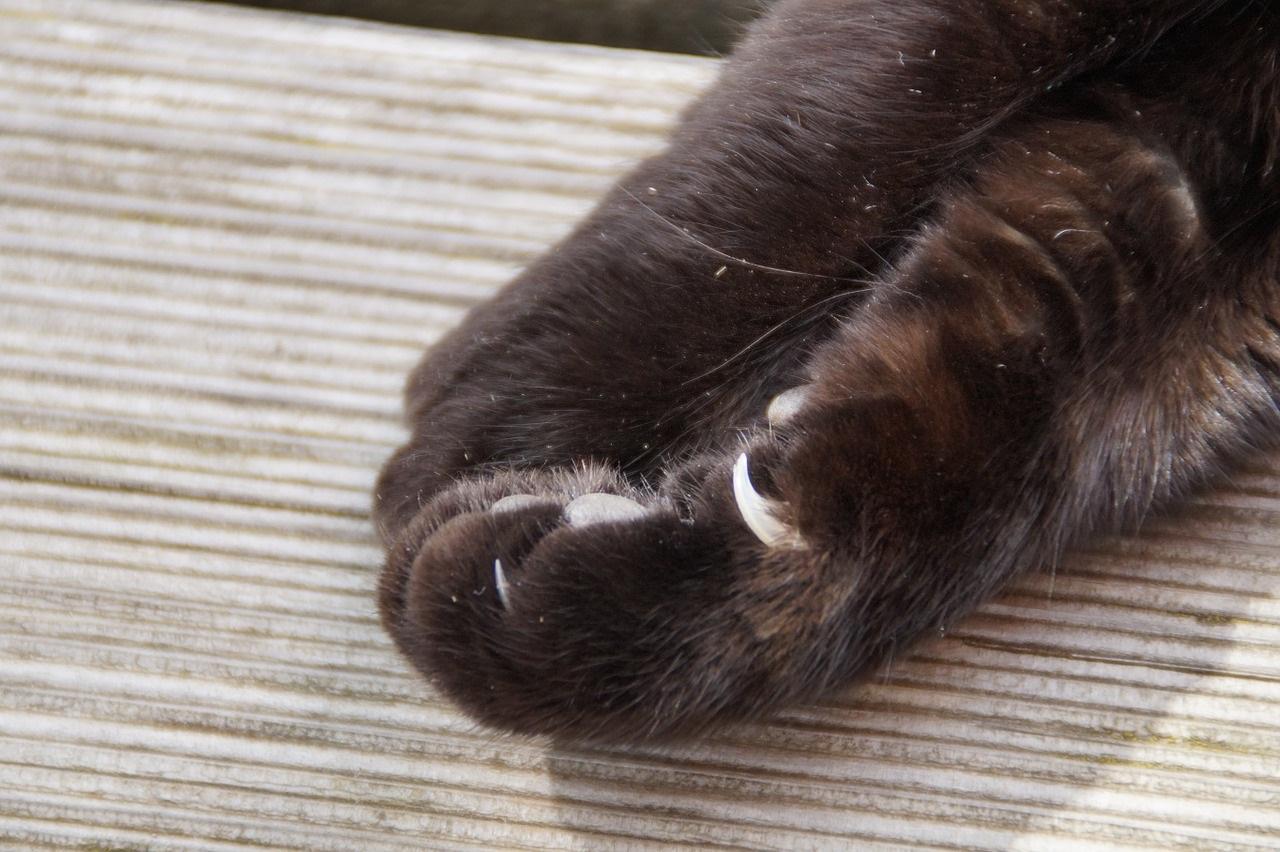 лапа кота фото (18)