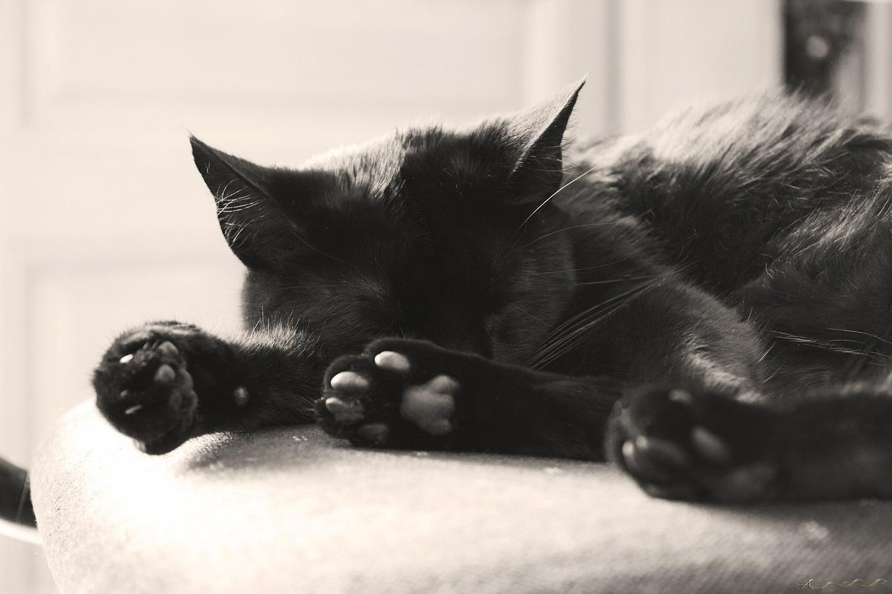 лапа кота фото (2)