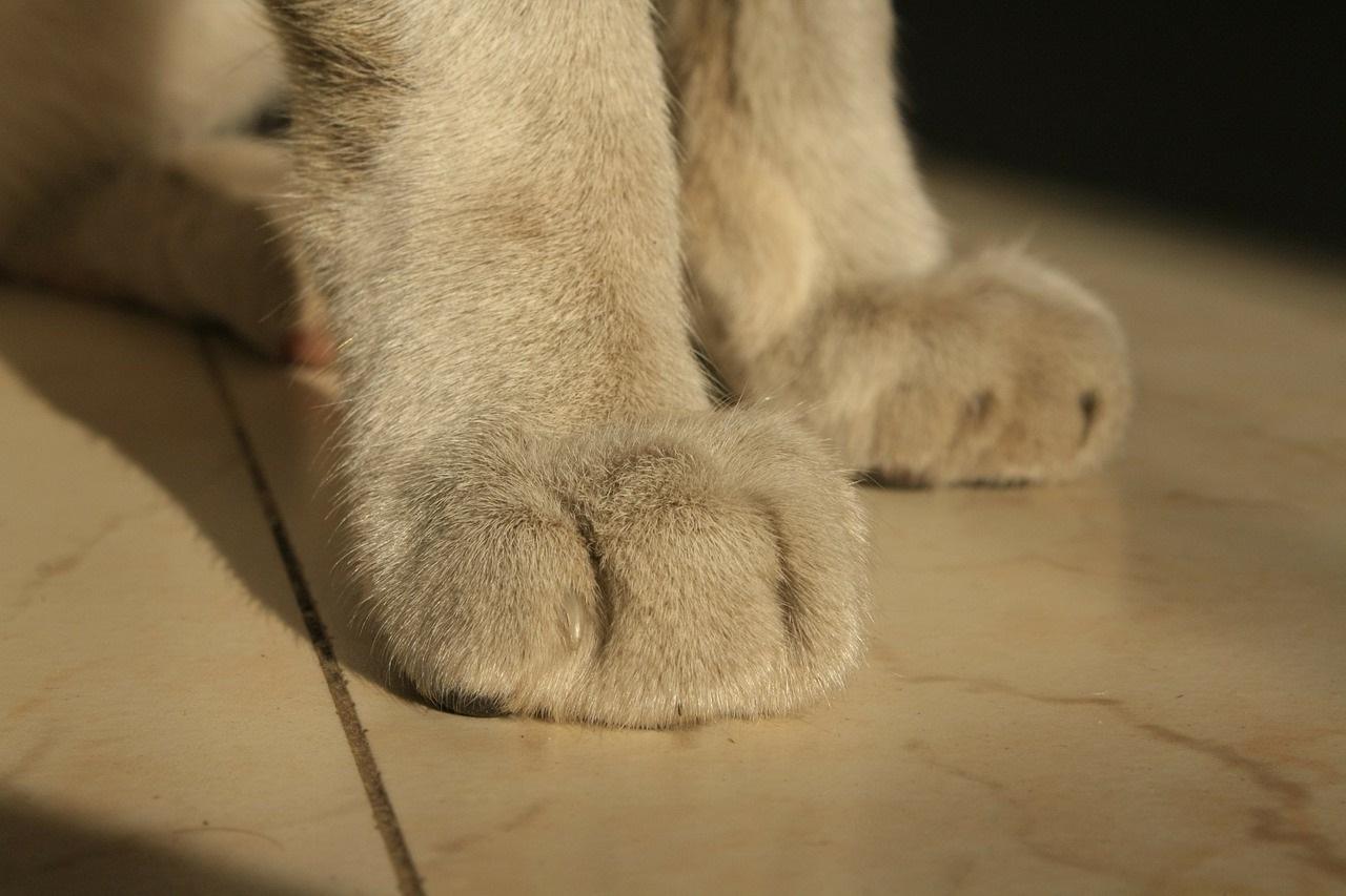 лапа кота фото (5)