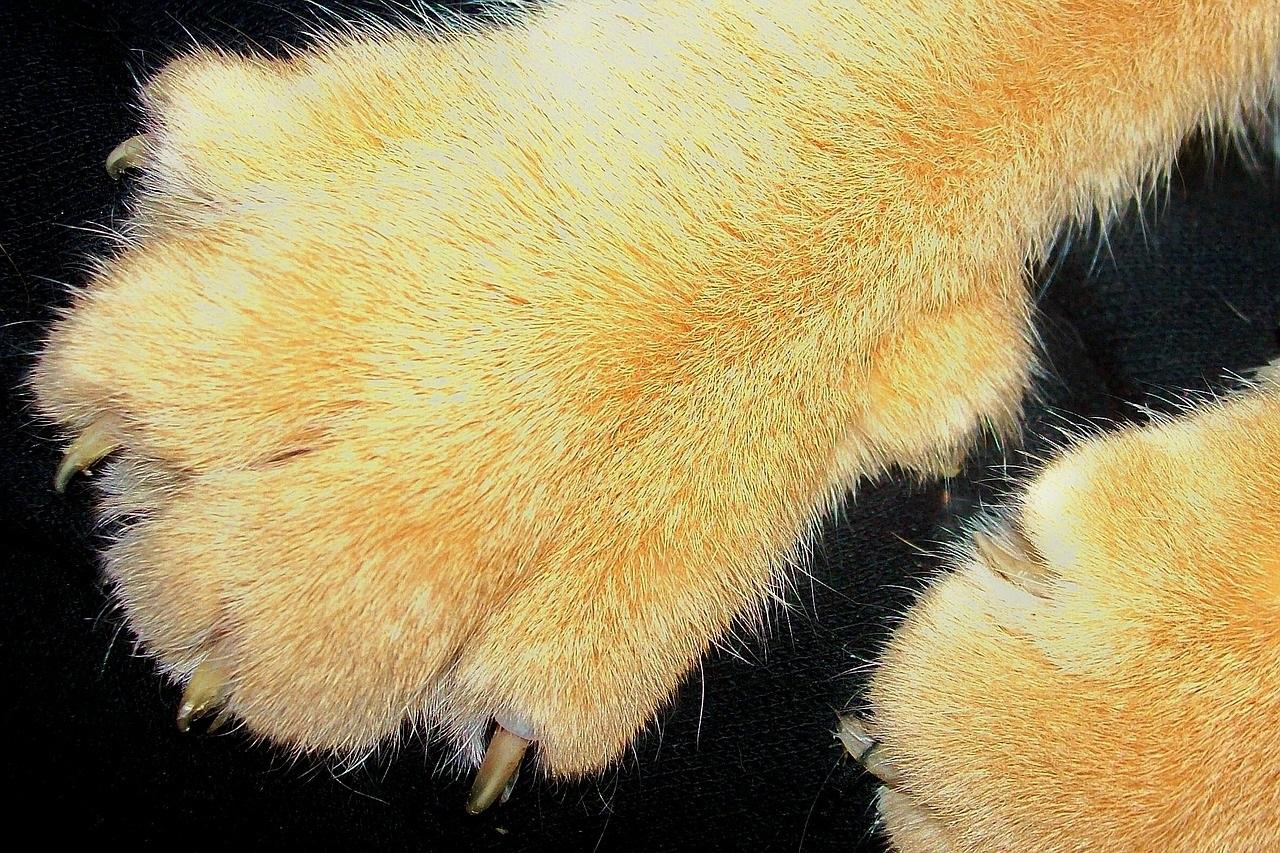 лапа кота фото (7)