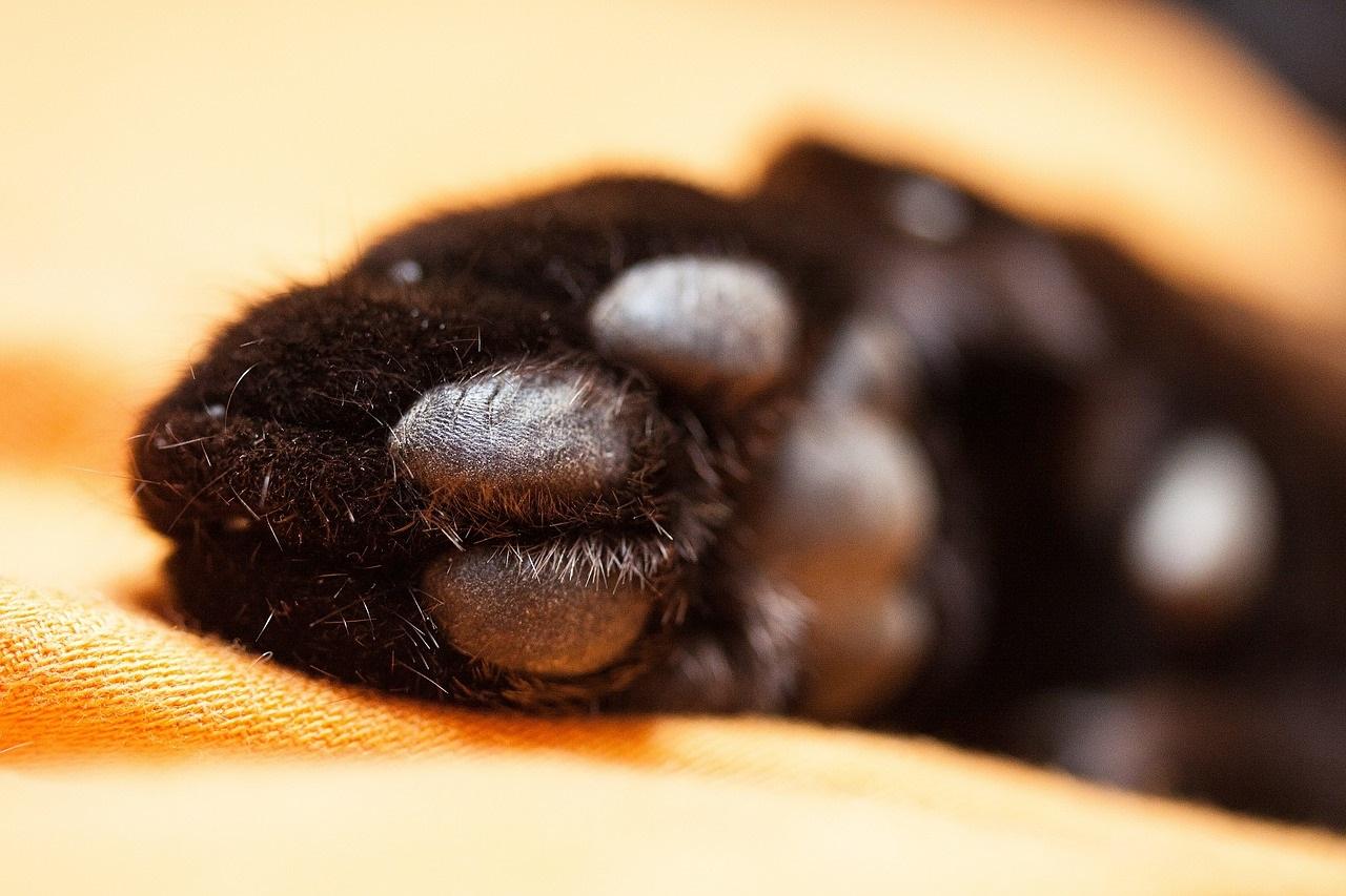 лапа кота фото (9)