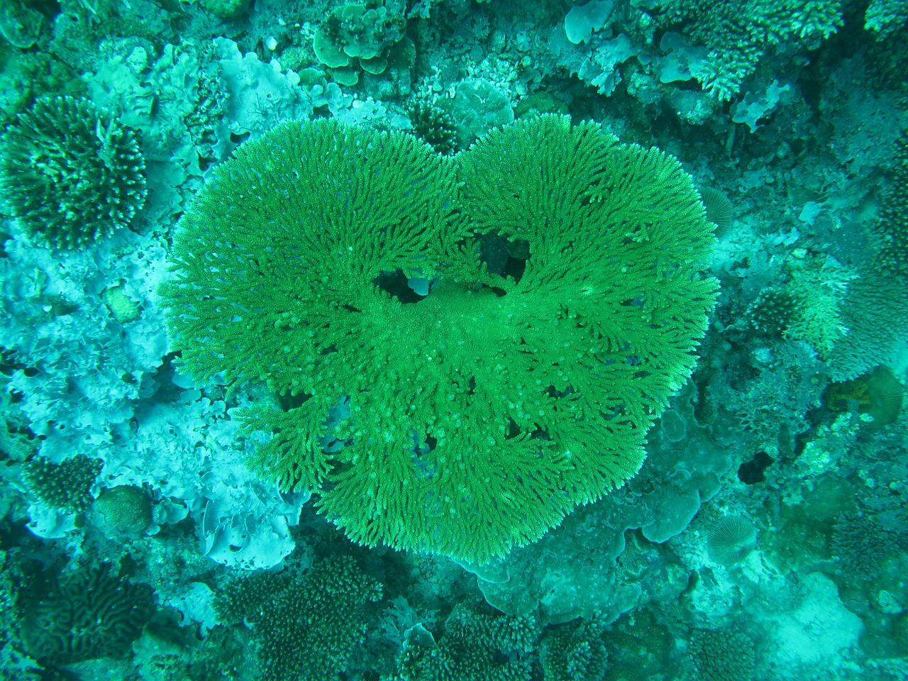 природа в виде сердца фото (4)