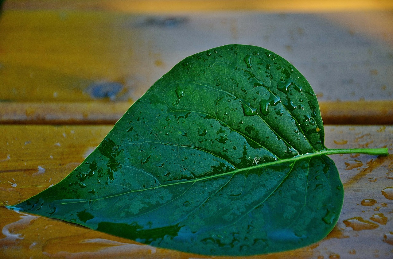 природа в виде сердца 10