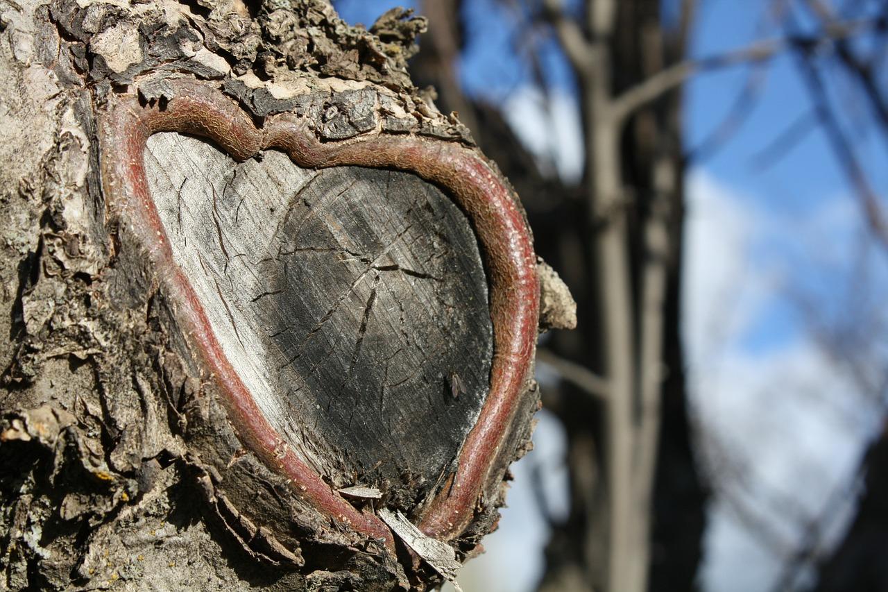 природа в виде сердца 12