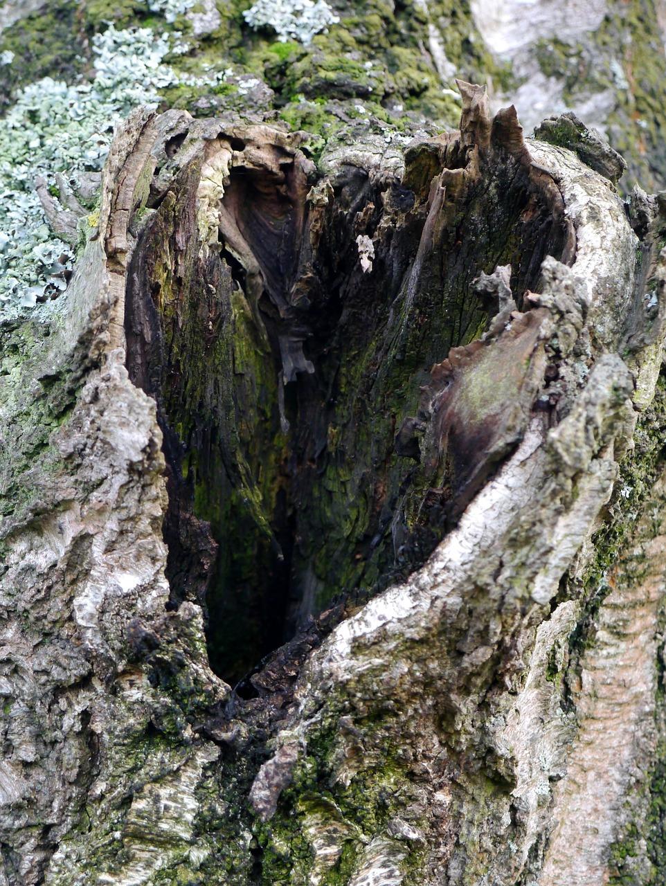 природа в виде сердца 2