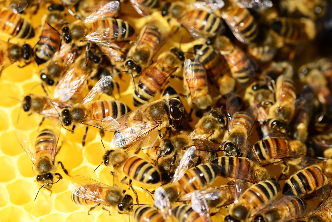 пчелы в декабре