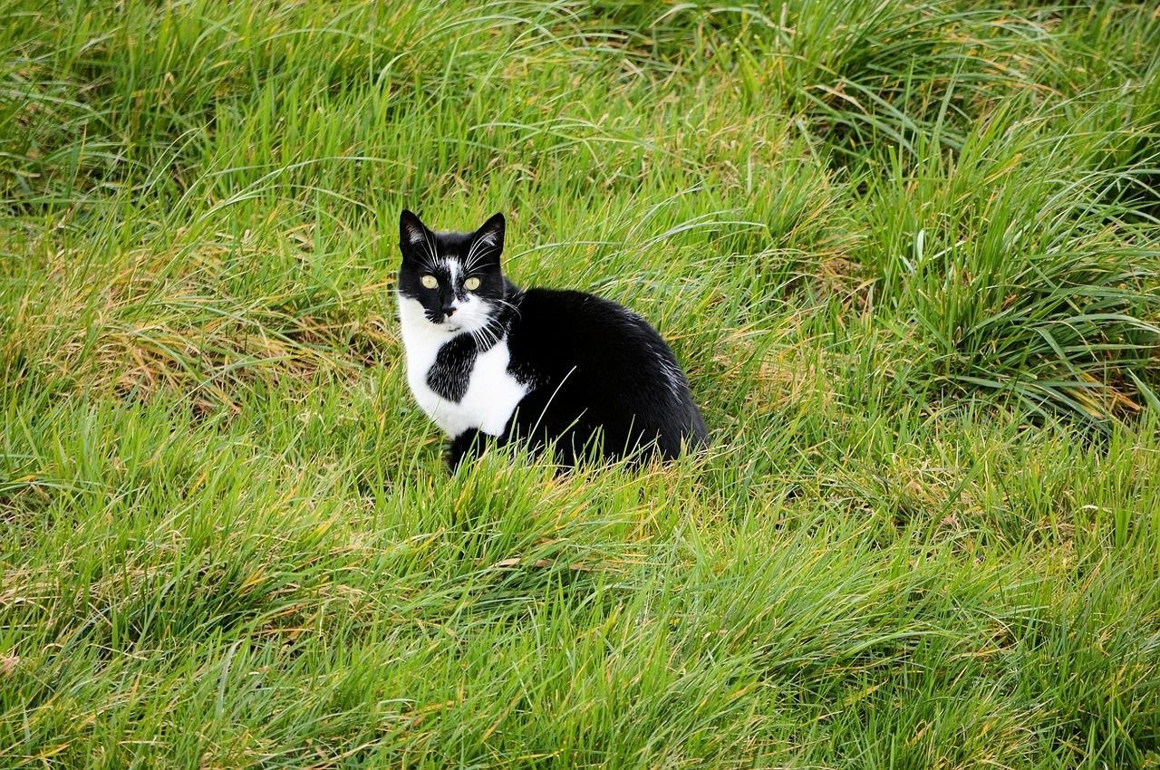 черно-белые коты фото (10)