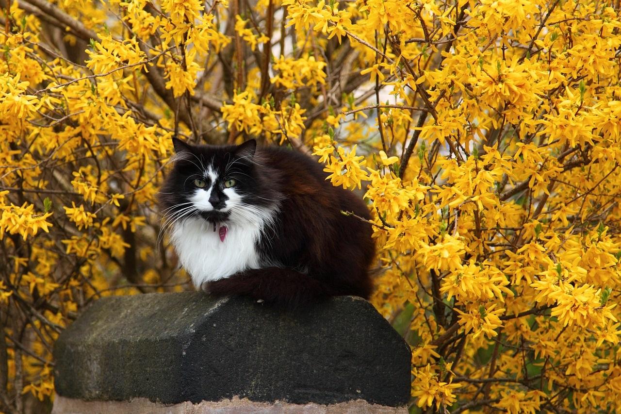 черно-белые коты фото (3)