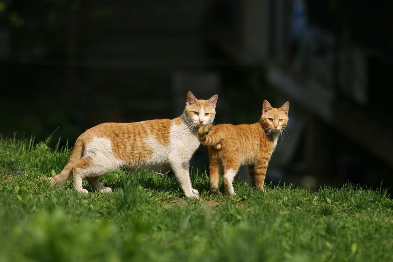 cat-237185_1280