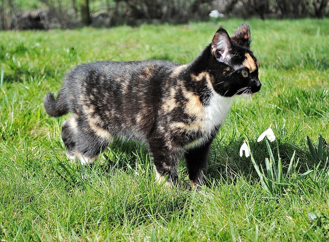 kitten-283159_1280