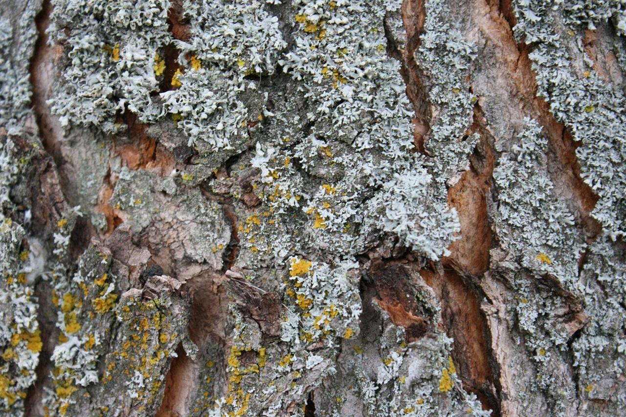мох на деревьях фото