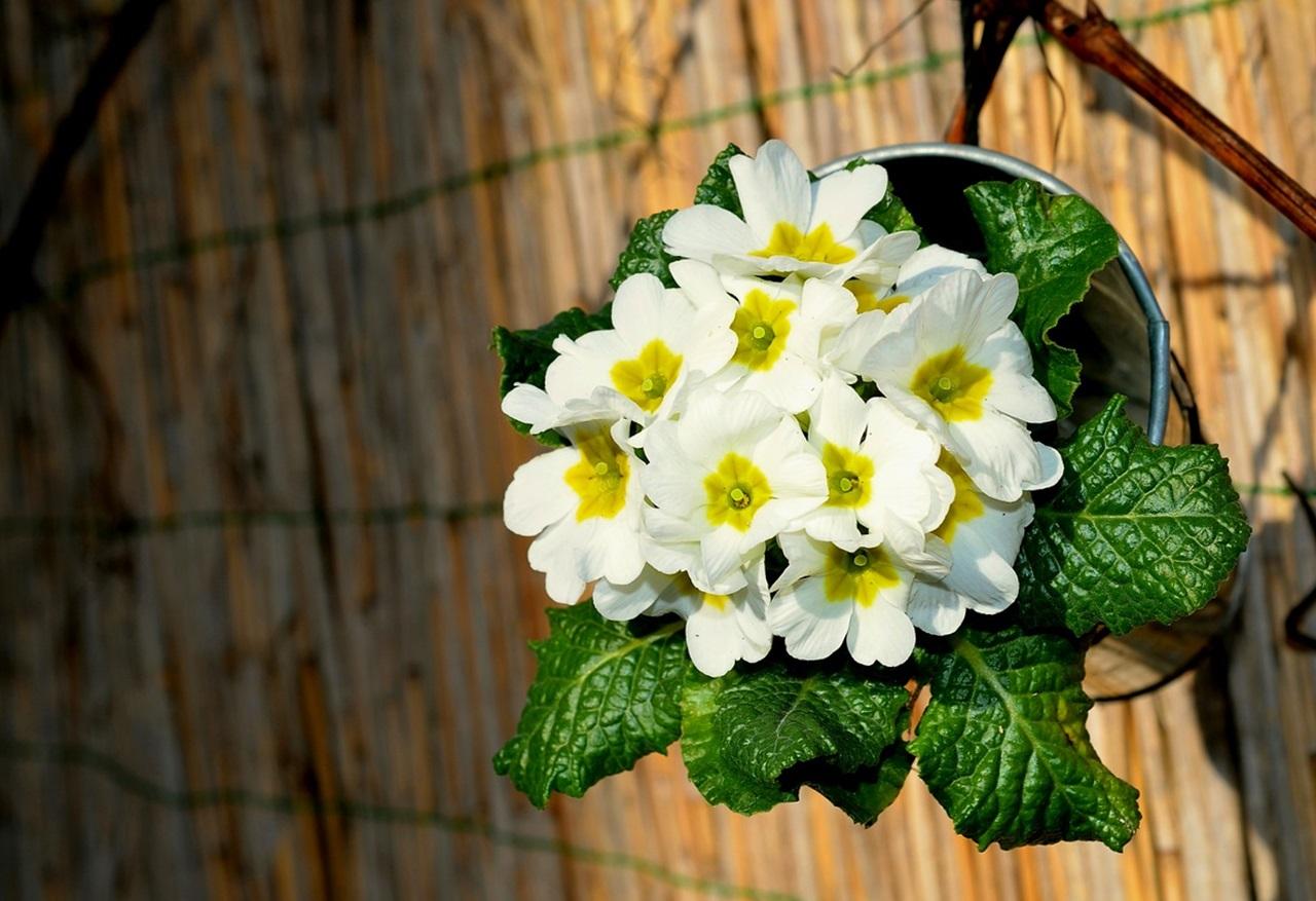 фото цветы весна 12