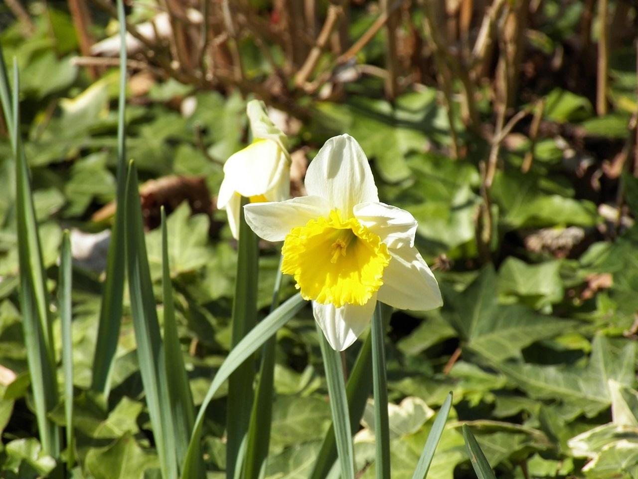 фото цветы весна 17