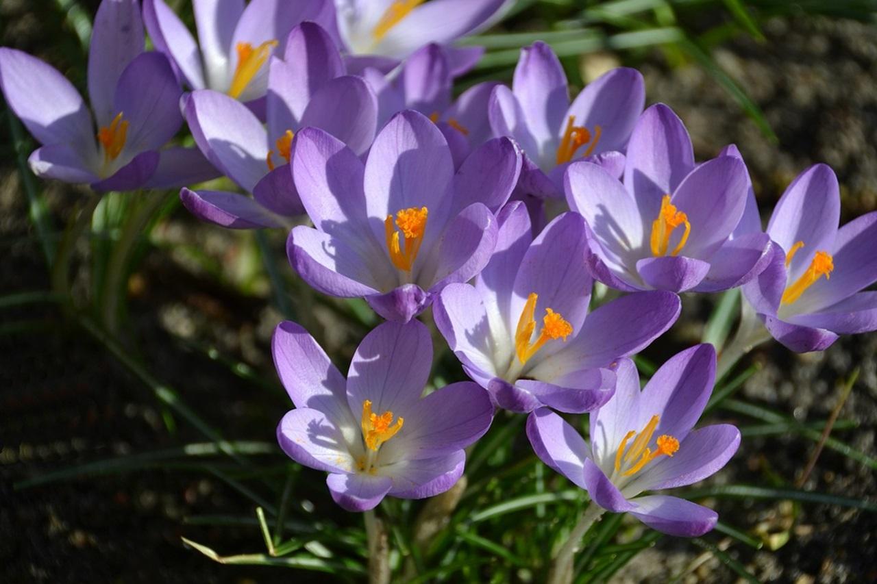 фото цветы весна 20