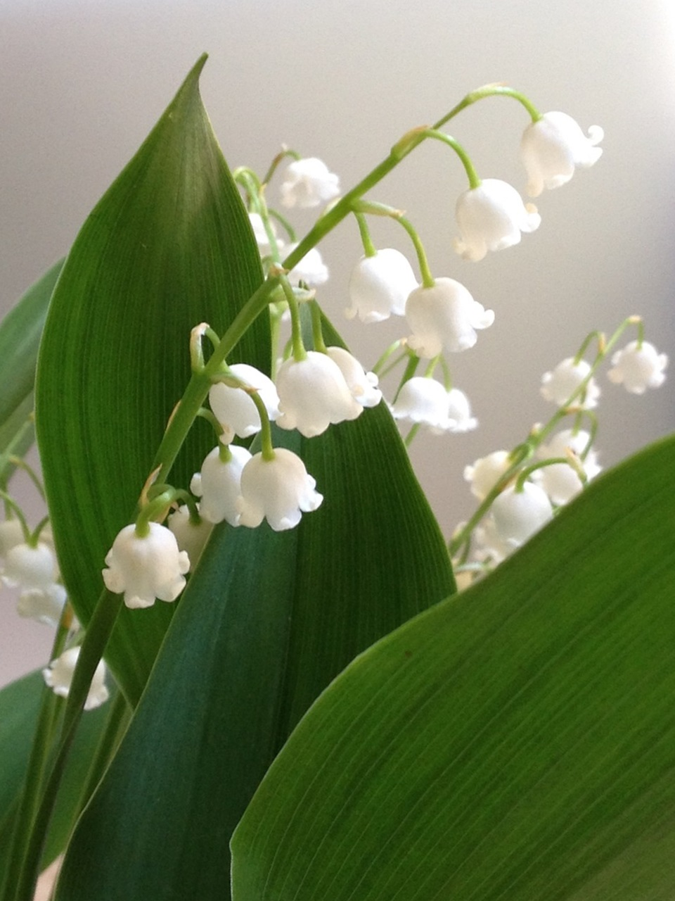 фото цветы весна 5