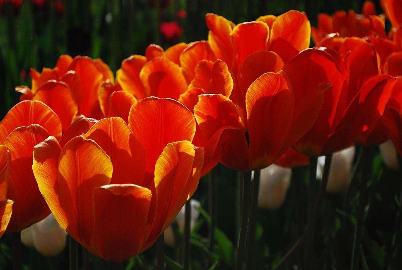 фото цветы весна 8