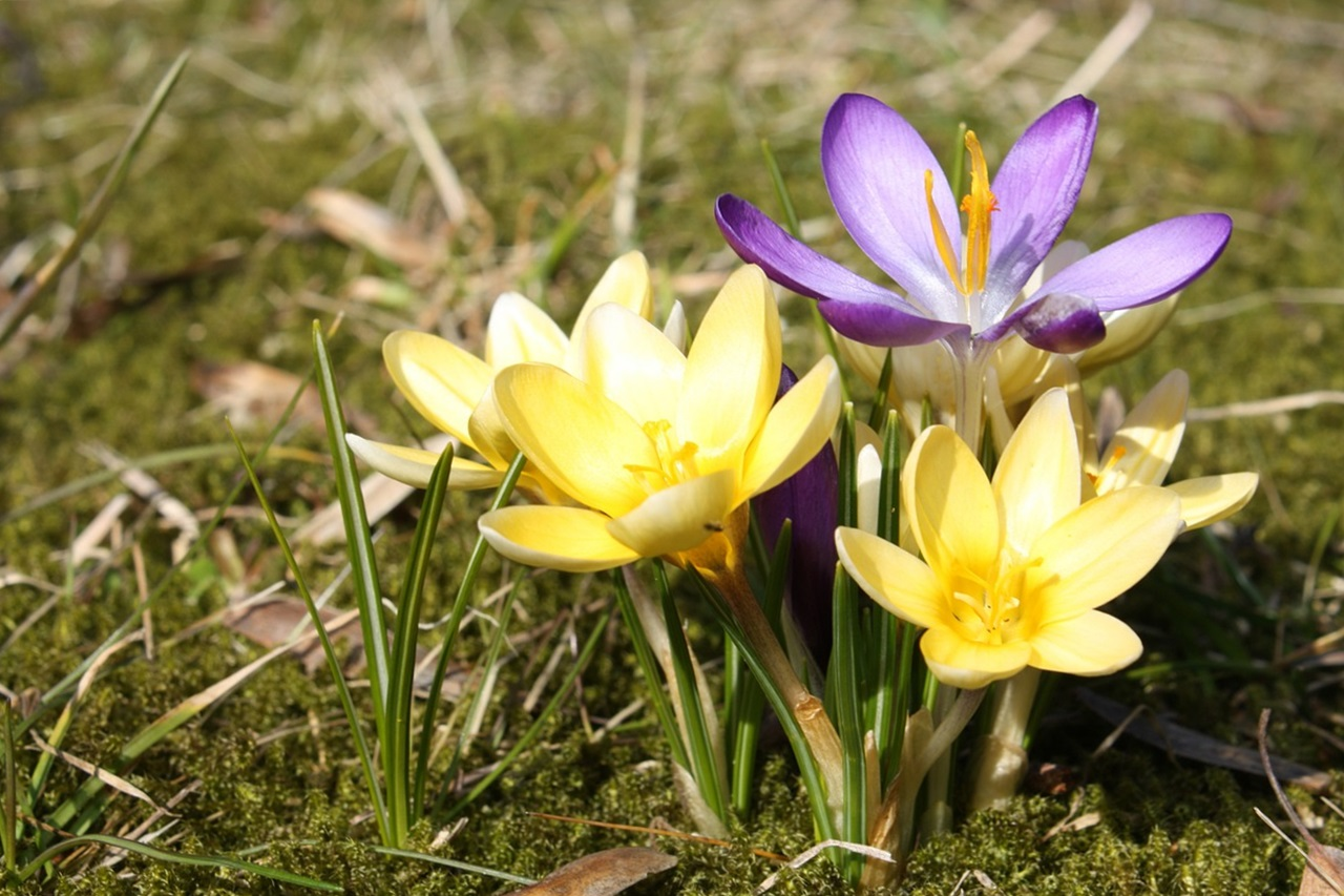 фото цветы весна 9