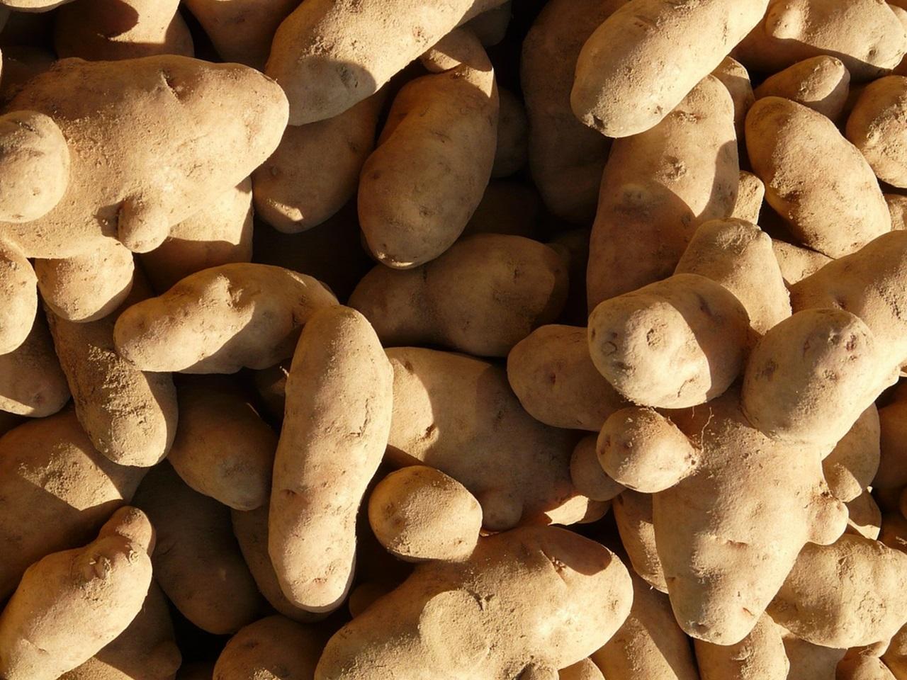сорта картофеля 4