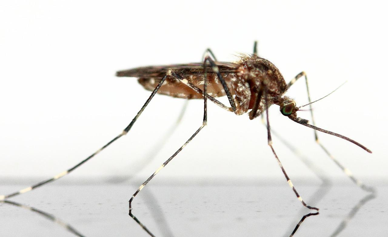 Защита от комаров народными средствами - комар фото