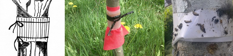 ловчие пояса для деревьев 1-horz