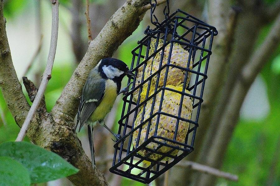 Как кормить птиц зимой 3