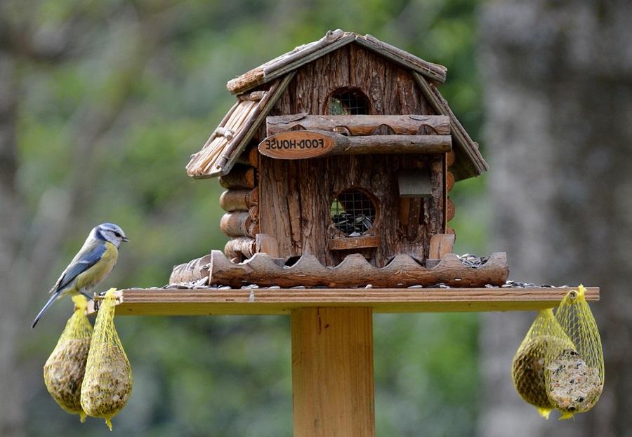 Как кормить птиц зимой 4