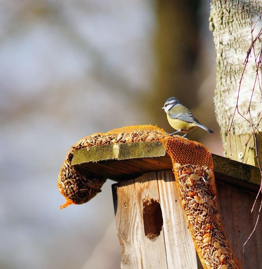 Как кормить птиц зимой 5