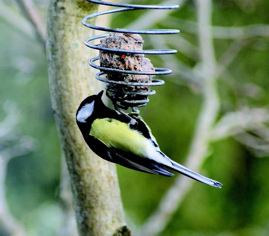 Как кормить птиц зимой 7