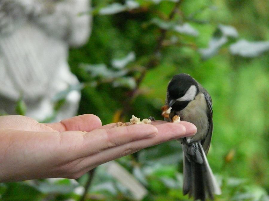 Как кормить птиц зимой 9
