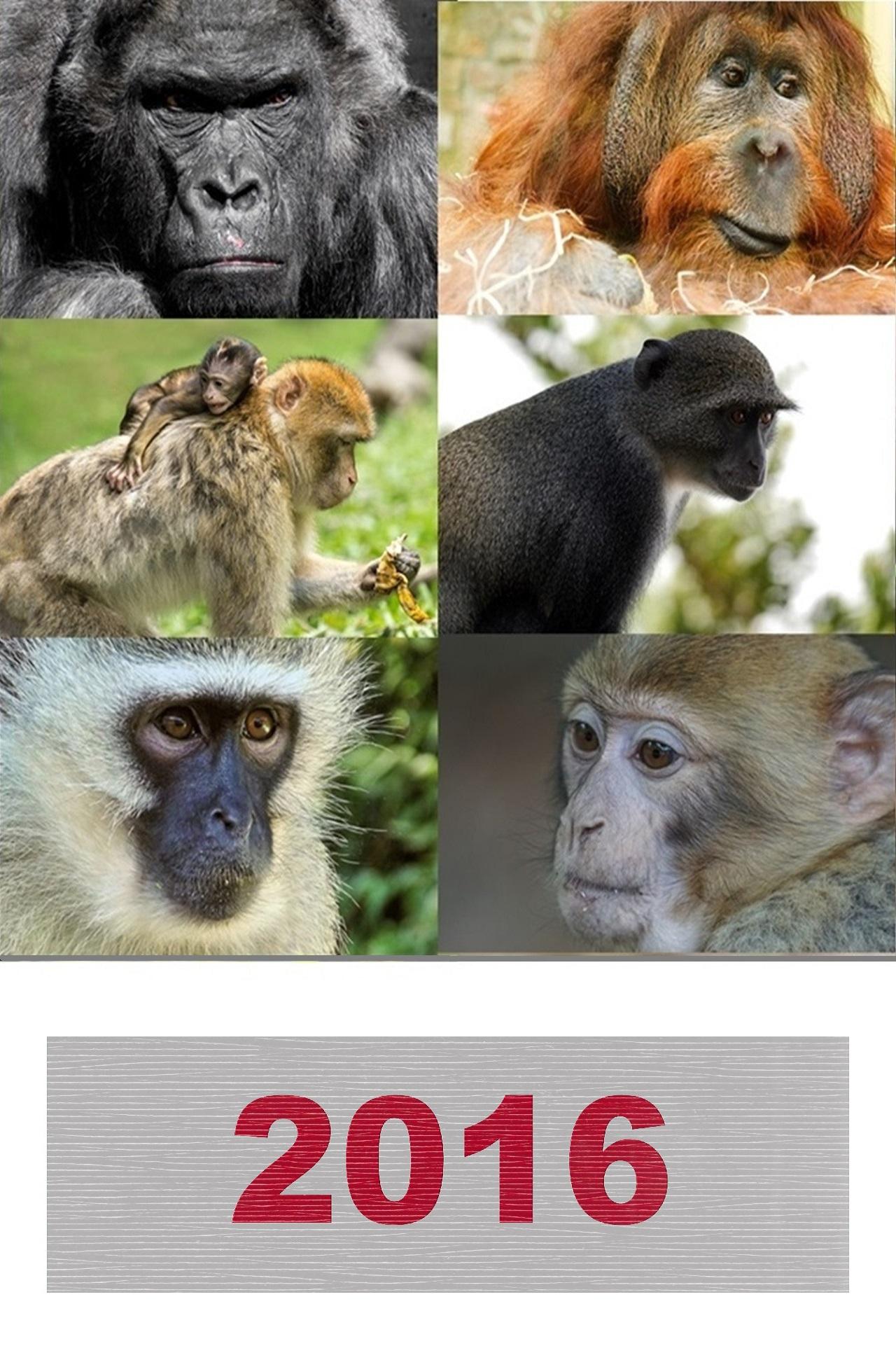 обезьяна 12-tile