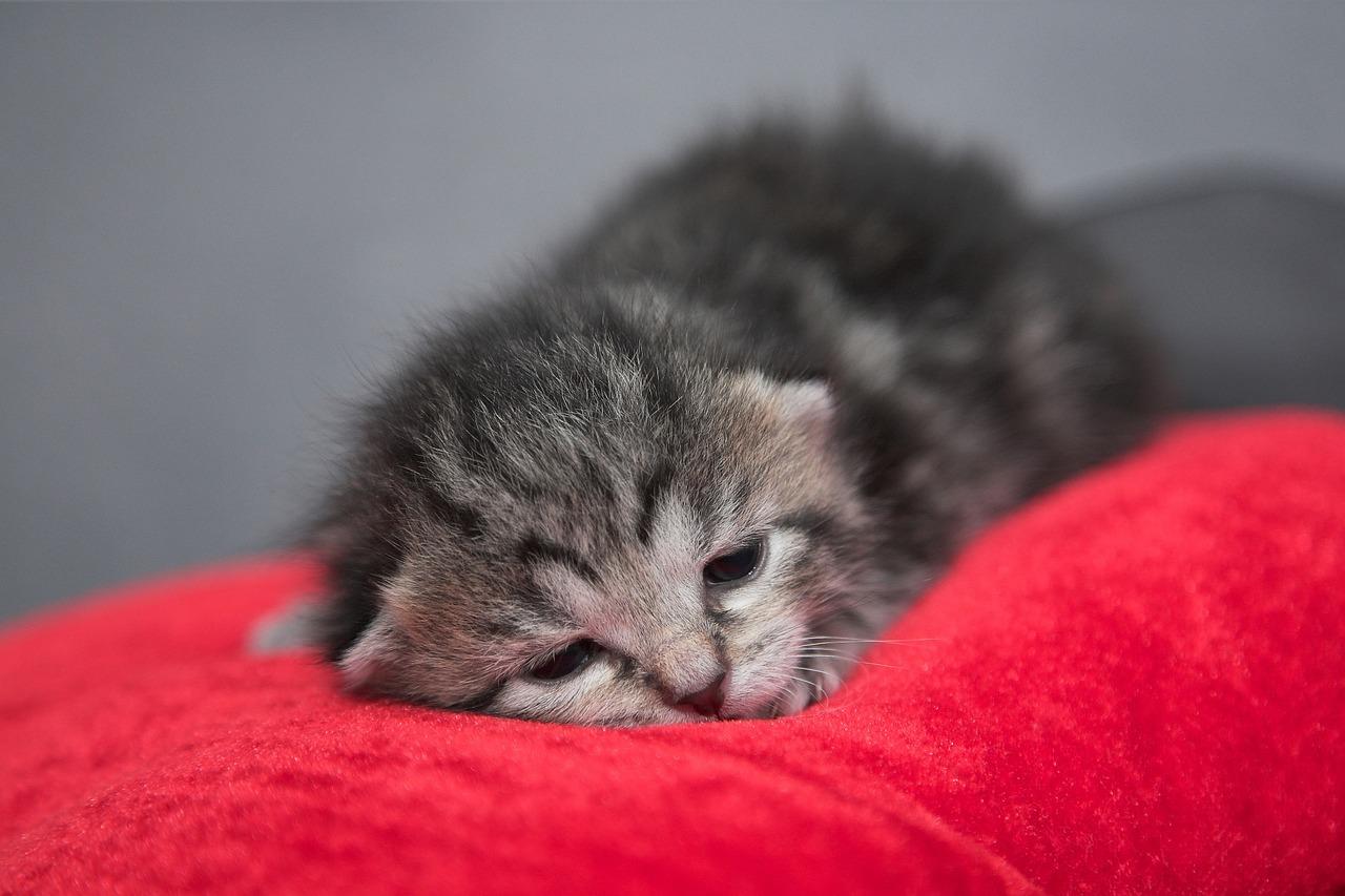клички для котов и кошек