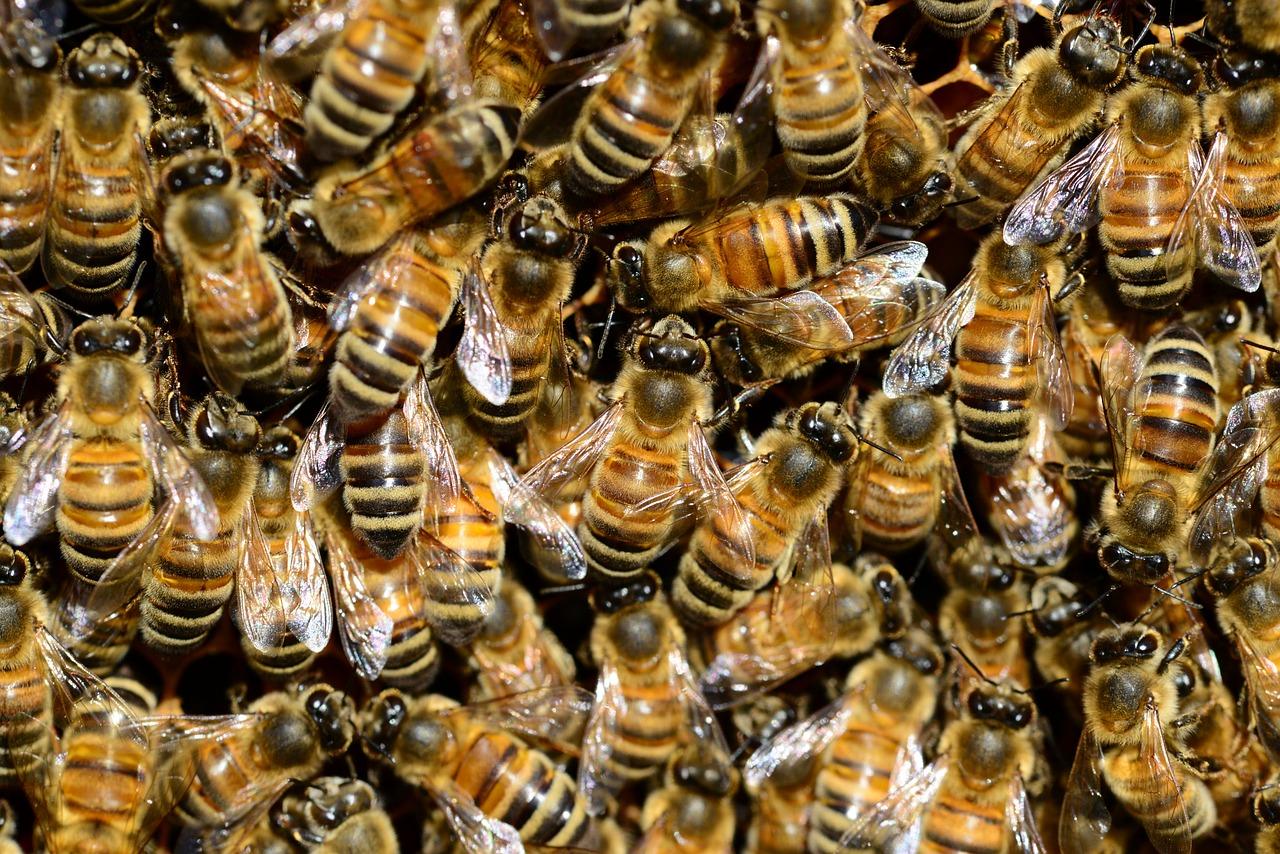 пчелы декабре