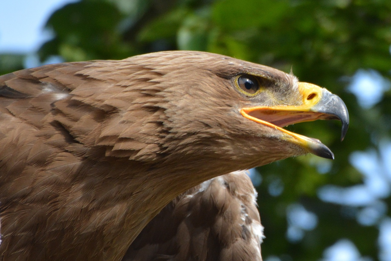 орел беркут 2