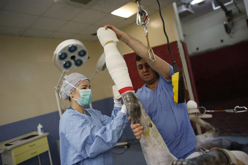 методы лечения лошадей лечение сустава лошади 1