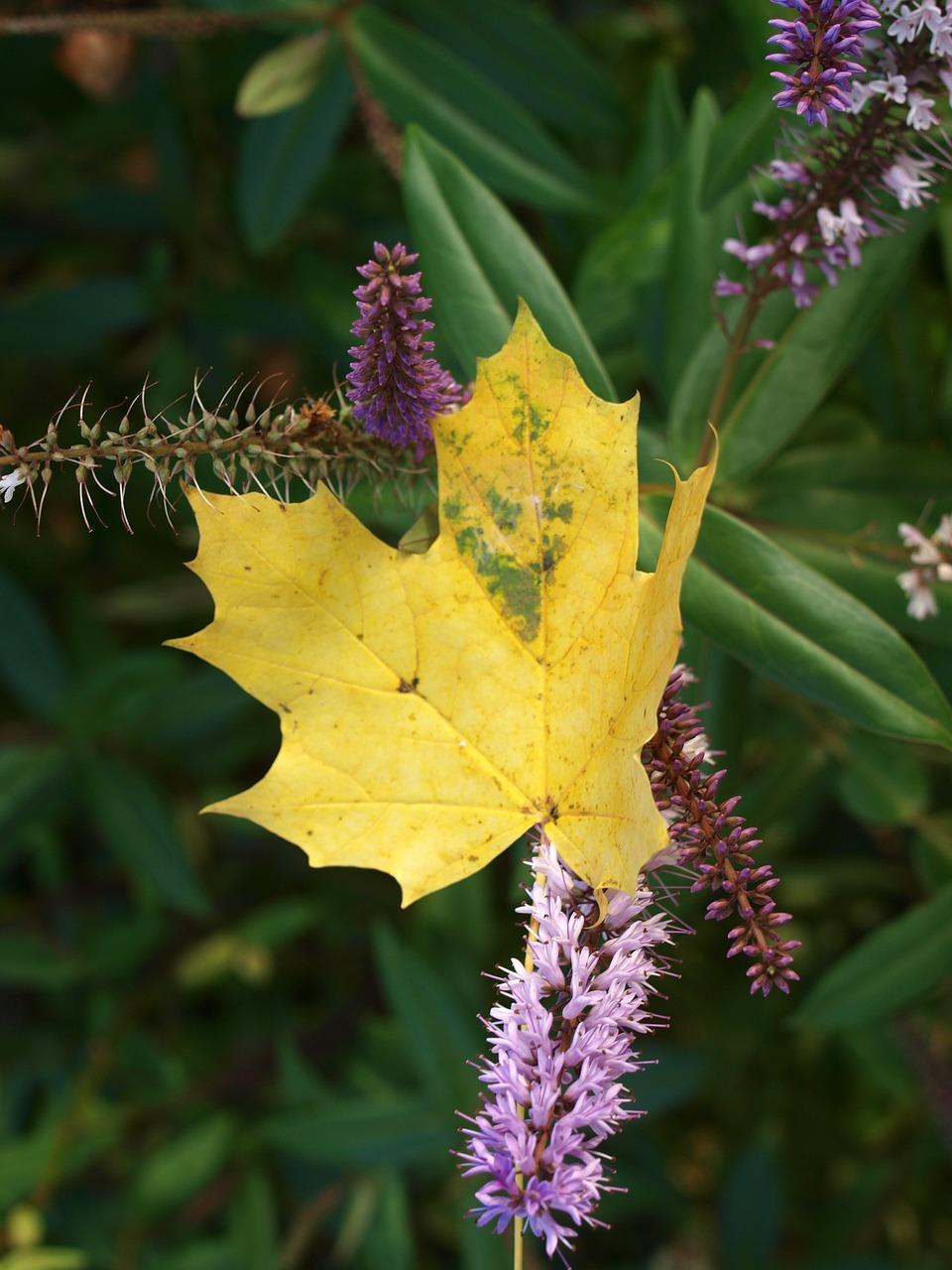Красивые фото осени - осенние листья 1
