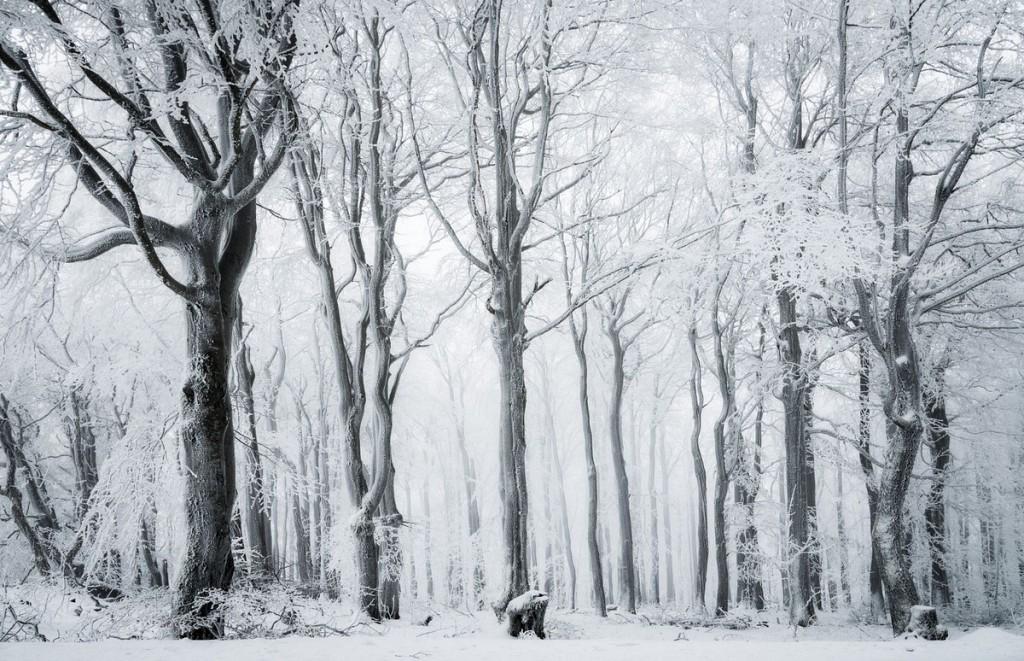 Красивая природа зимой фото 05