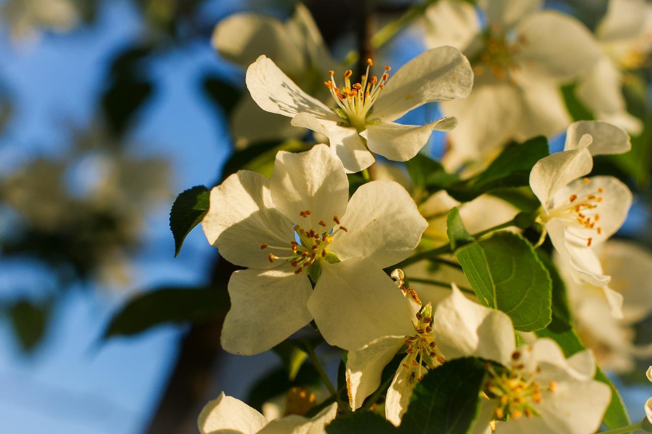 Майский сад: садовые работы в мае, ТОП-15 самых необходимых
