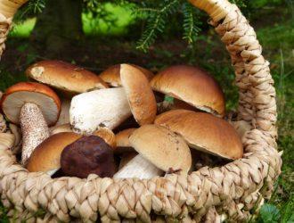 Календарь грибника на сентябрь — какие грибы собирают в сентябре
