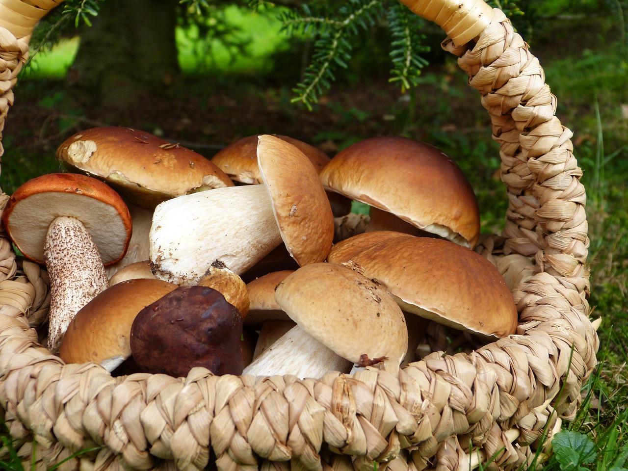 Календарь грибника на сентябрь - какие грибы собирают в сентябре