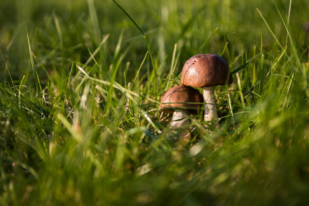 Календарь грибника на август - какие грибы собирают в августе